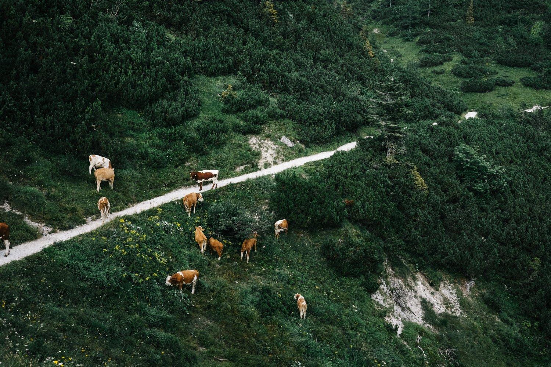 berchtesgaden_wandern_alpen_21