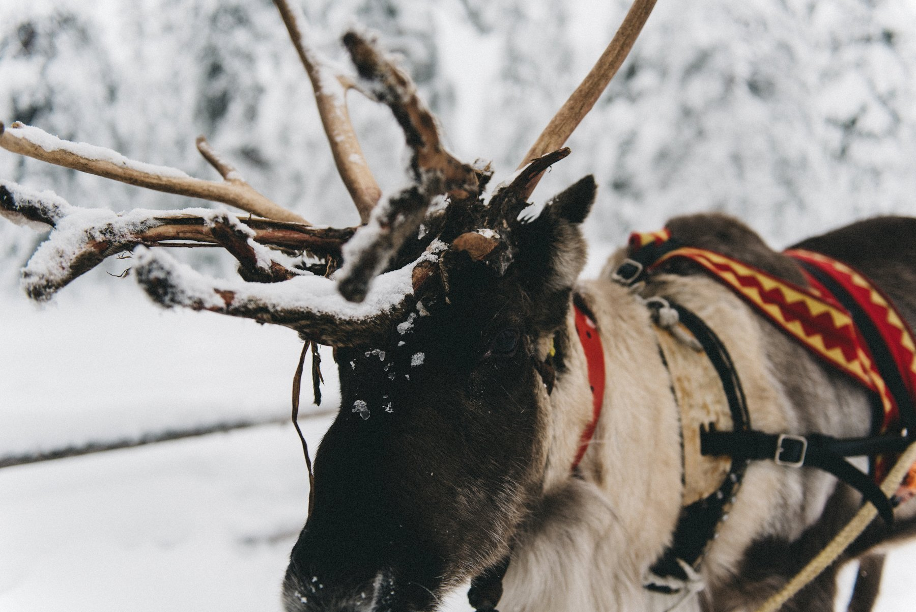 reisefotografie-lappland-finnland-132
